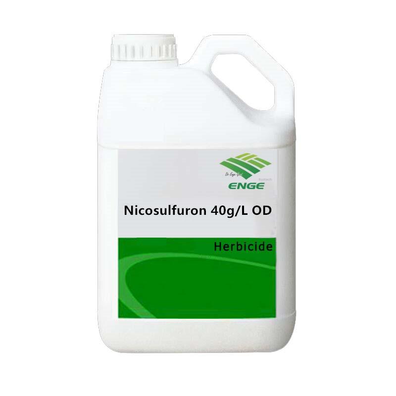Nicosulfuron 40g OD